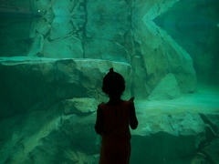 Four Year Old Shanel Crawford-Anticipates A Swimming Polar Bear at the Brookfield Zoo -  Image by Michael Bracey